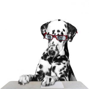 Le chien MBR - Groupe MBR